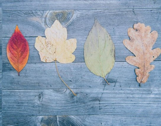 changing leafs